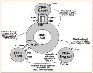 Approfondimento_Microambiente_Hodgkin_Figura_2